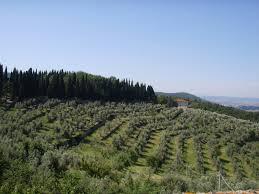 Gli oliveti dell'Umbria