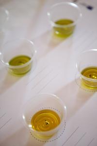 degustazione olio umbria frantoi aperti